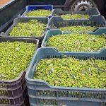 aceite de oliva virgen extra de ciudad real