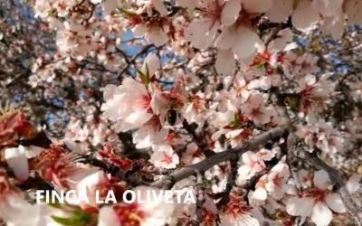 Damos la bienvenida a la primavera en Finca La Oliveta