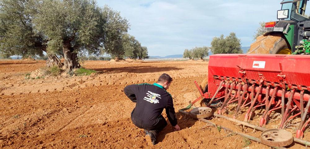 Cubiertas vegetales para fijar nitrógeno y recuperar suelos