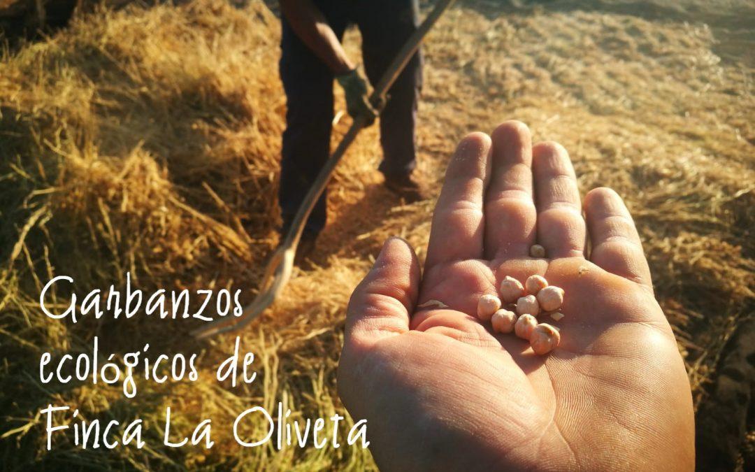 Garbanzos ecológicos en Finca La Oliveta