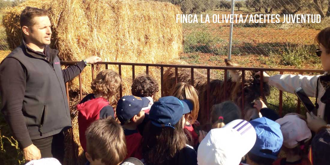 OLEOTURISMO-FINCA-LA-OLIVETA-COLEGIO-CIUDAD-REAL