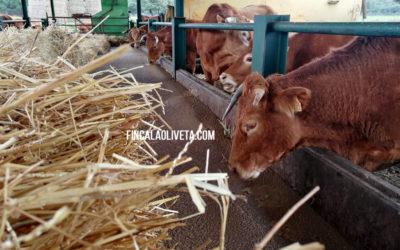 Economía circular, agricultura, ganadería ecológica y de ciclo biodinámico